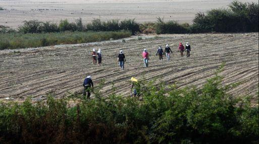 Grupo Romero y japonesa Mitsui crean empresa de fertilizantes ... 5a4a3ce3854