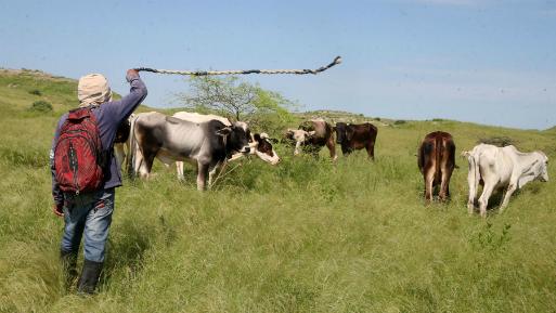 Sector agropecuario creció 1.8 % en primer bimestre pese a Niño costero 5ffd9bdb696