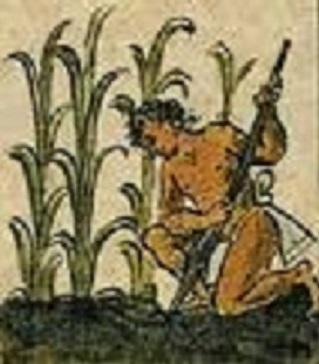 Contando La Historia La Agricultura Inca Agronline