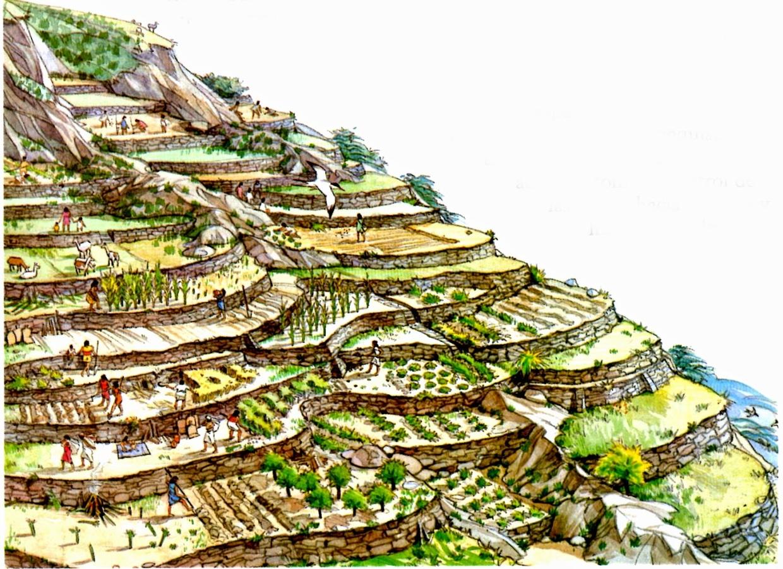 Contando La Historia Cultivos De Los Incas Y La Milenaria