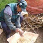 Piura: producirán más de 42 000 plantones de quina y aliso en Huancabamba y Ayabaca