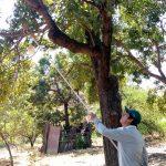 Cajamarca: Proyecto de erradicación de moscas de la fruta busca generar impactos positivos para el sector
