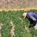 Inician implementación del Seguro Agrícola Catastrófico para campaña agrícola 2020-2021 en 24 departamentos del país