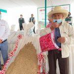 INIA: Desarrollan primer super pasto ryegrass con alta calidad genética para alimentación de ganado