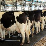 Evolución de la producción mundial de leche