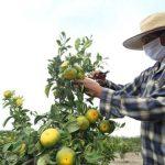 Se reestructurará el FAE-Agro para flexibilizar créditos a agricultores, anuncia Gobierno