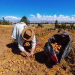 Arequipa: con tecnología inteligente buscan dar mayor competitividad a la agricultura
