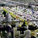 Cayeron los empleos ligados a la exportación