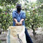 Guano de las islas: conoce al superfertilizante que mejora la calidad del agro peruano