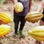 Asia llegaría a ser el principal mercado para el cacao peruano en cinco años