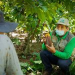 Cerca de 3,000 cacaoteros del Vraem son asistidos en manejo integrado de plagas