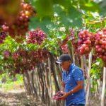 Sector agropecuario creció 1% en primer bimestre del año, pese a impactos de COVID-19