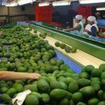 Agroexportaciones crecieron 50% en abril y las frutas frescas siguen conquistando mercados