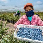 Agroexportaciones crecieron 31% en mayo y las frutas frescas siguen conquistando mercados