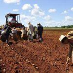 Prevén crecimiento de hasta un 6% en la producción agrícola 2021 – 2022 de la región Ica