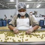 Perú se ubica como séptimo proveedor mundial de aceituna de mesa, según la CCL